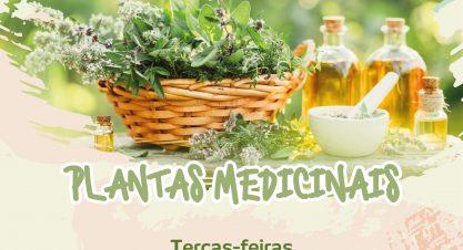Encontros de Sabedoria – Curso de Plantas Medicinais